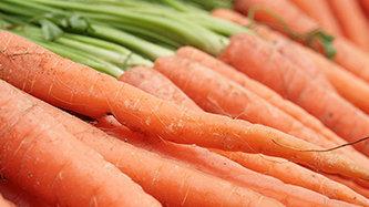 Cenoura: Legume rico em valores nutricionais e medicinais