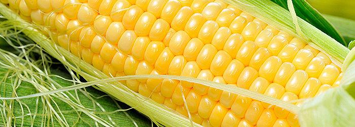 O milho protege nossas células, reduz os níveis de colesterol, ajuda no controle do açúcar no sangue e previne problemas cardíacos.