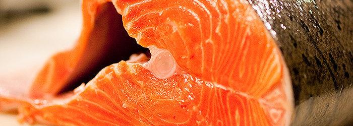 As proteínas ingeridas a partir do salmão (e a maioria dos outros peixes) são de fácil digestão e facilmente absorvidas pelo corpo.