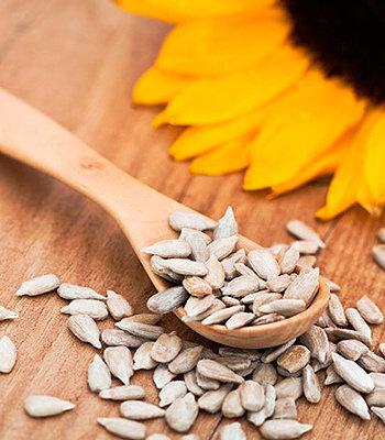 Sementes de girassol são ricas em vitamina E e podem ajudar na manutenção de uma sua função circulatória adequada.
