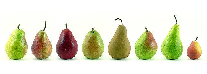 Existem milhares de variedades de pera cultivadas em todo o mundo. As cores das peles variam de amarelo, verde, castanho, vermelho, ou podem ser uma combinação de qualquer uma destas cores.