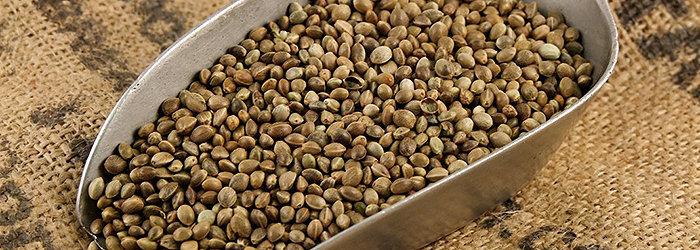 As sementes de cânhamo foram usadas por milhares de anos por várias culturas como uma medicina tradicional e um suplemento dietético.