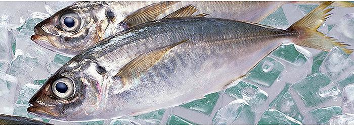 O alto consumo de peixes no Japão fez diminuir o número de ocorrência de doenças cardíacas.