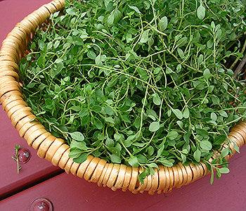 Experimente acrescentar temperos, como: alecrim, hortelã, orégano ou o tomilho à seus pratos